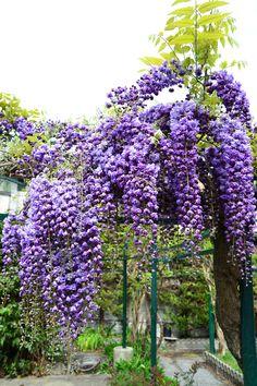 The garden ( Italia )