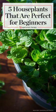 Indoor Plants Low Li