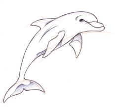Dolphin Drawings in Pencil | How To Draw A Dolphin