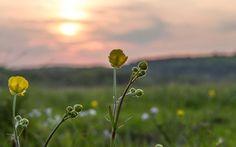 Insel des Lichts - Sonnenuntergang im Achterland