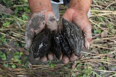 1-Year Anniversary Oil Spill in Ecuador's Amazon - Amazon Frontlines Judicial Branch, Human Rights Lawyer, Fight For Justice, Big Oil, Oil Industry, Oil Spill, Ecuador, 1 Year, Anniversary