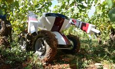 Meet Wall-Ye: The French grape-picking robot which can work day and night - and may well put vineyard workers out of a job