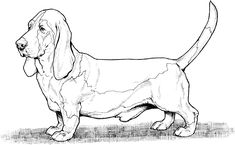 dog color pages printable | Dog Breed Coloring Pages