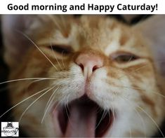 Happy Caturday! (did this pic make you yawn?) We're open and will have the coffee on! (and tea and goodies ) #mewow #catcafe #caturday #catsandcoffee #mewowcatcafe #lovecats #lifewithcats #catsarethebest #catsareawesome #adoptacat #catadoption #adoptdontshop #cutecat #catsrule #catsarethebest #fortheloveofcats Instagram News, Cat Cafe, Good Morning, Adoption, Goodies, Tea, Coffee, Cats, Happy