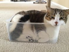 creative cat storage