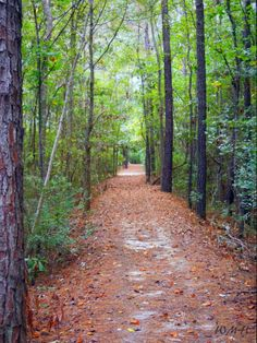 Wood Song Nature Trail, Shallotte NC.