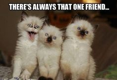 Yup!  A kittie after my own heart!  I think he even kind of looks like me!