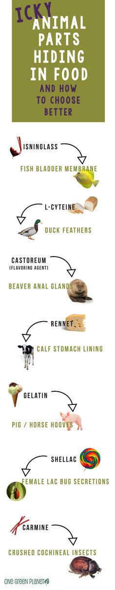 Icky Animal Ingredients hiding in your food. #vegan #infographic