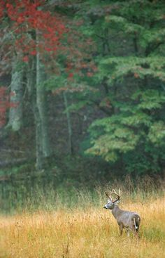 For the love of Cades Cove!