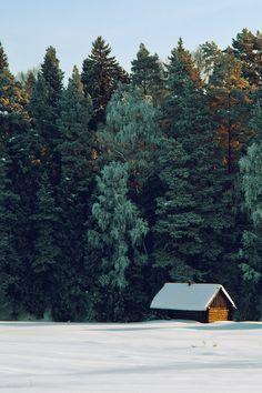 A lonely cabin in winter on the edge of a wild forest. Pictures like this is what I dream of.