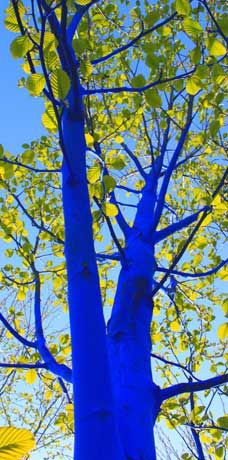The Blue Trees, Konstantin Demopoulos, Burke-Gilman Trail, Seattle. Trees in some of Seattle's parks are now a bright Smurf-like shade of blue in a semi-permanent project by artist Konstantin Dimopoulos. Blue Trees, Western Washington, Photography Pics, Something Blue, Water Garden, Get Outside, Public Art, Installation Art, Shades Of Blue