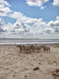 TEXELPICS (pictures from the island Texel) © Marlon Paul Bruin