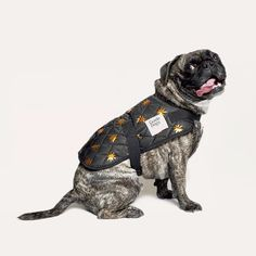 How good is this collab? @gormanclothing and @elkaccessories have just launched a limited edition collection of puppy products with all proceeds going to @guidedogsvictoria. Just send me this complete package pooch'n'all.  . #ofkin #woof