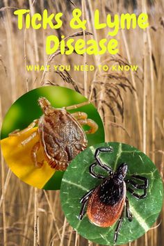Can you identify ticks and know the harm they cause to both you and your pets? Learn how to check yourself and pets for them and get to know the symptoms of Lyme Disease