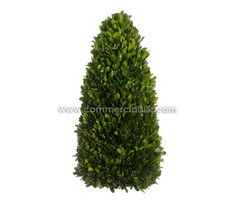 Preserved Boxwood Cone Topiary Plants | Preserved Plant Topiaries