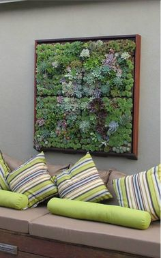 A vertical garden green wall with a living succulent picture