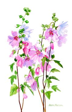 Pink Mallow Flowers Floral Watercolor watercolor by ssfreemanart
