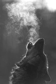 Awesome picture of a howling wolf by Old & Rusty