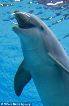 Social: Dolphins are very friendly animals and like to play with fellow dolphins or anything they can get their fins on