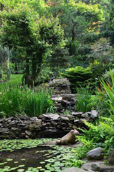 North Carolina garden pond