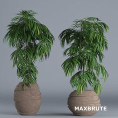 cây 3dmax trang trí #11 - Maxbrute Furniture Bodbyn, Ficus, Plant Decor, Trees To Plant, Planters, Texture, Surface Finish, Tree Planting, Plant