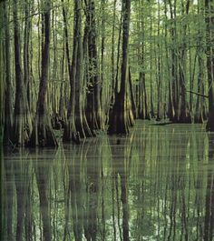 Louisiana Bayou - Loved our trip to Louisiana. Our first trip after retirement and my time in a plane. Slytherin, Louisiana Swamp, Cypress Trees, Cypress Swamp, Southern Gothic, Road Trip Usa, The Last Airbender, Anakin Skywalker, Beautiful Places
