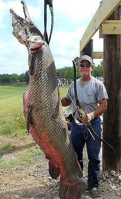 Very strange looking alligator gar