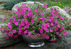 Everything You Need to Start a Container Garden: Container Choice - Choosing Containers for Container Gardens