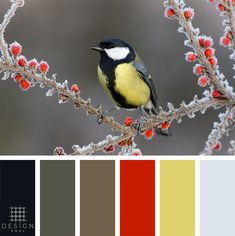 Find beautiful seamless vector designs for use in residential and commercial interior design. Colour Pallette, Color Palate, Colour Schemes, Color Combos, Color Blending, Color Mixing, Color Palette Challenge, Pool Colors, Coordinating Colors