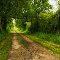 Country Road in Poland