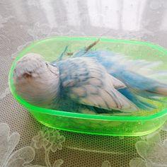 セキセイインコ ぴい 鳥フォトコンテストvol.014 テーマ「水浴び」結果発表