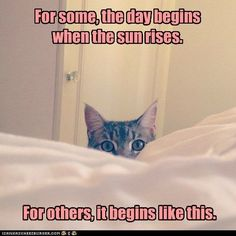 For some, the day begins when the sun rises.  For others, it begins like this. #cat #meme