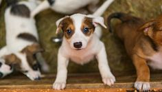 26 Step Checklist for Adopting a New Dog or Puppy (Do It Right!)