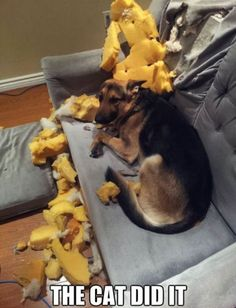 I didn't do anything         #loldogs #funnydogs #dogs