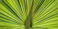 Andrea Haase - Tropical Green