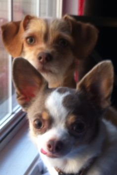 Hercules & Zooey enjoying their window view.