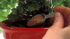 Vezme kávu a nasype jí do květináče! Nejlepší domácí hnojiva pro pokojové rostliny! | Vychytávkov