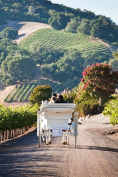Napa carriage rides