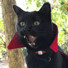 """""""Vampurr."""" . credit: @catswiththeirtonguesout . C'monBoard Cats features the most adorable cats and kittens. Keep an eye on CB website [link in the bio] for your daily share of cuteness. . . . Make sure to check out our cat-themed products at www.cmonstore.com"""