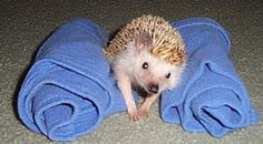 Wobbly Hedgehog Syndrome Page - Just in case it's ever needed for my babies
