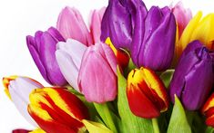 Download wallpapers colorful tulips, spring, congratulations, a bouquet of tulips, spring flowers