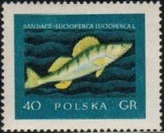 Znaczek: Sander (Polska) (Fishes) Mi:PL 1051,Sn:PL 810,Yt:PL 928,Pol:PL 906
