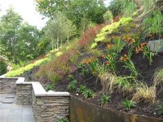 we could forget the wall and just landscape the slope...looking for something that would be pretty all year