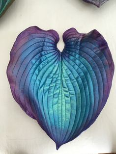 Blue and purple Hosta