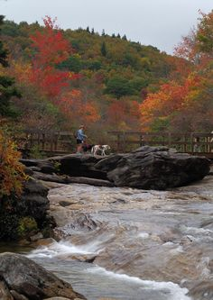 Taking the dog for a fall hike at Graveyard Fields along the Blue Ridge Parkway in North Carolina