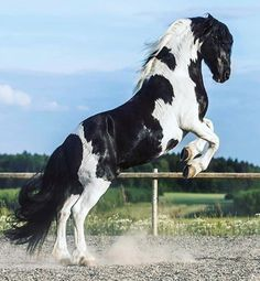 Looking for female horse names? Here is a collection of best female horse names. Painted Horses, Cut Animals, Animals And Pets, Clydesdale, Horse Riding Quotes, Types Of Horses, Horse Names, Appaloosa Horses, Most Beautiful Animals