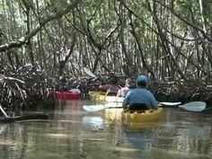 Almost Heaven Kayak Adventures is the largest kayaking eco tour company in the greater Sarasota area; including Siesta Key, Anna Maria Island, Lido Key, Longboat Key, Myakka, and Sarasota.