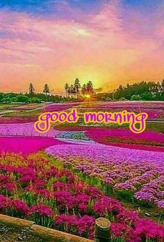 Good Morning Beautiful Flowers, Good Morning Nature, Good Morning Sister, Good Morning Roses, Good Morning Happy, Good Morning Photos, Morning Pictures, Beautiful Sunset, Good Morning Wishes Quotes