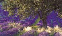 Von der Provence zur Cote d´Azur