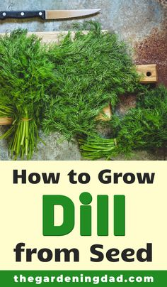 Learning How to Grow Dill from Seed is so easy and rewarding! Learn growing, caring, harvesting, and storing tips and ideas! And you'll even save money!